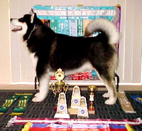 "Grandsire: BIS Ch Snowlion Ghost of Wovoka WTD WPD ""lakota"""